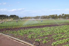 uitisig-farm-01.jpg