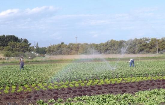 Uitsig Vegetable Farm